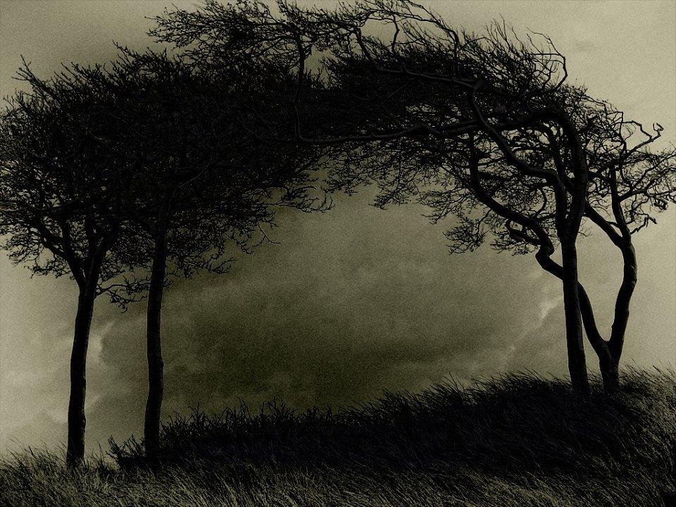 Die Silhouetten zweier Bäume vor stürmischem Himmel.