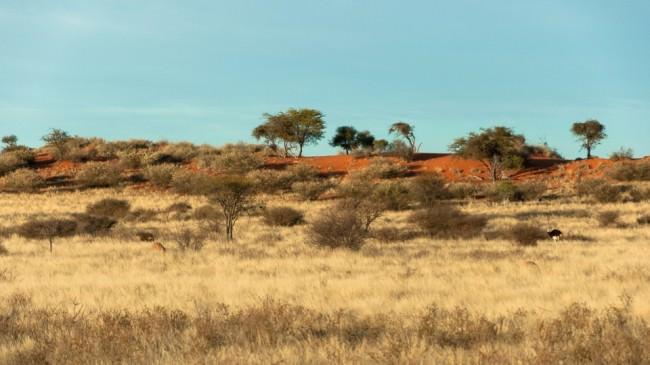 Steppe in Gelb- und Rottönen mit Büschen und einigen Bäumen vor blauem Himmel.