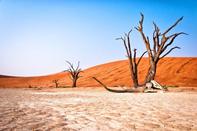 Rote Dünenlandschaft mit abgestorbenen Bäumen.