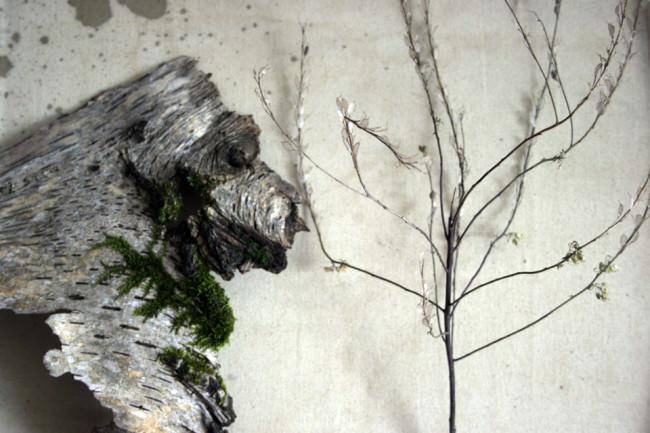 Birkenrinde mit Moos und ein Ästlein mit durchsichtigen Blättern.