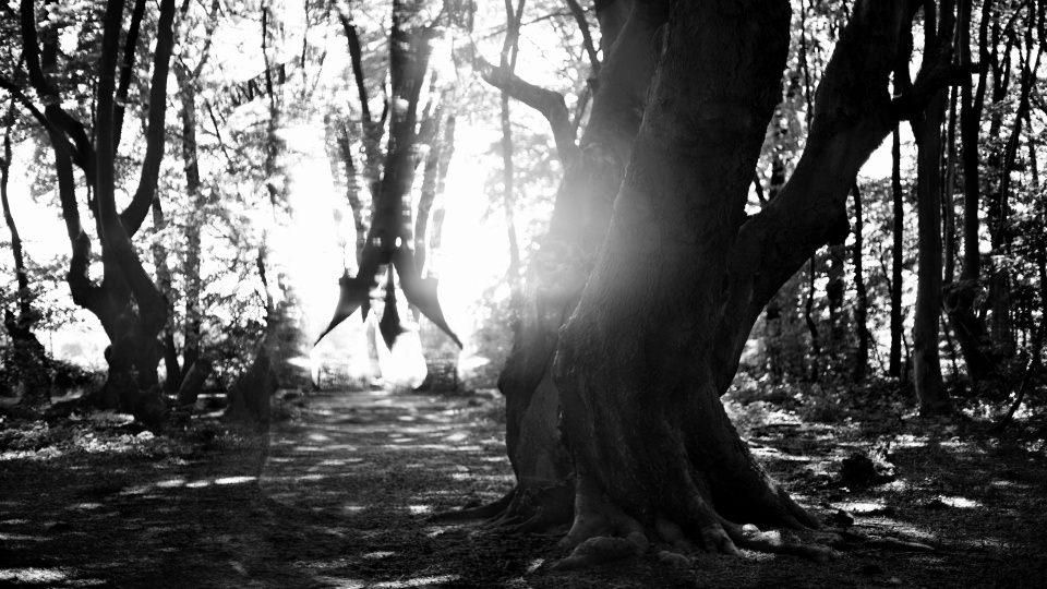 Großer Baum im Wald mit Lichtreflexionen.