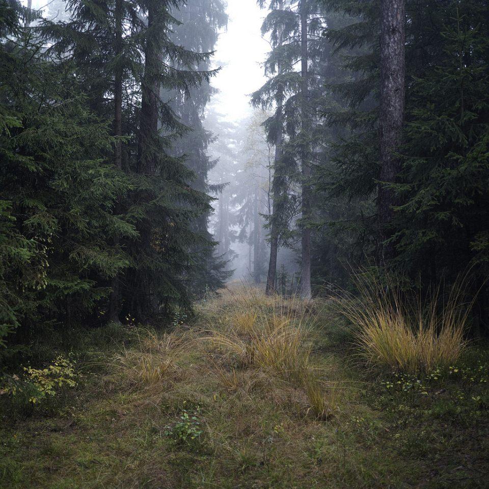 Nebliger Weg im Wald.