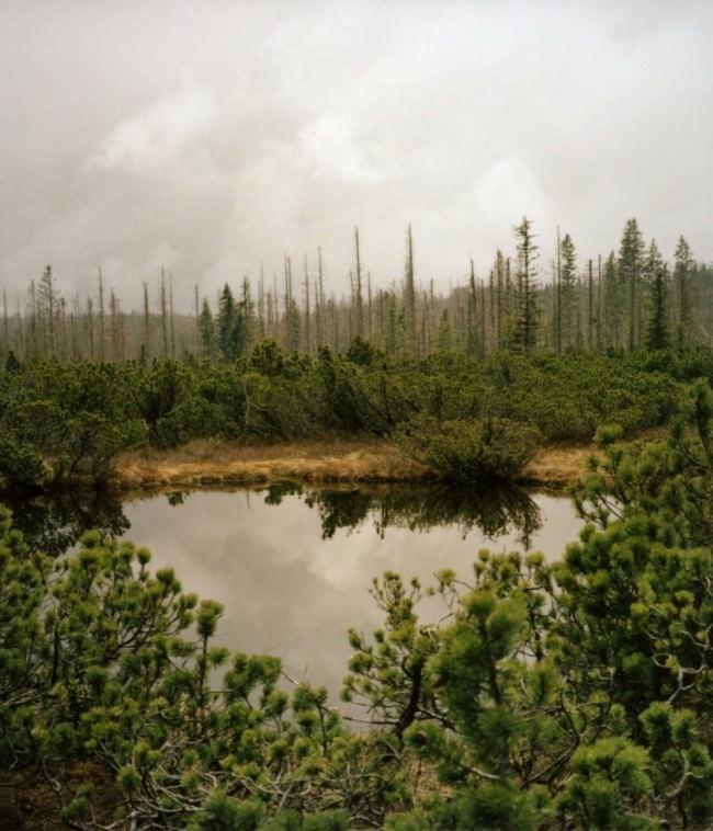 Ein See, umgeben von Nadelbäumen.