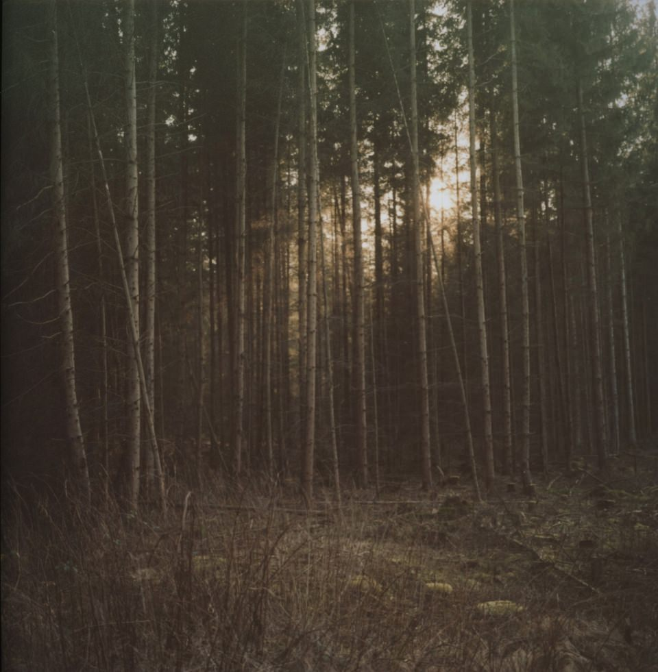 Tiefstehende Sonne bricht durch die Bäume in einem Wald.