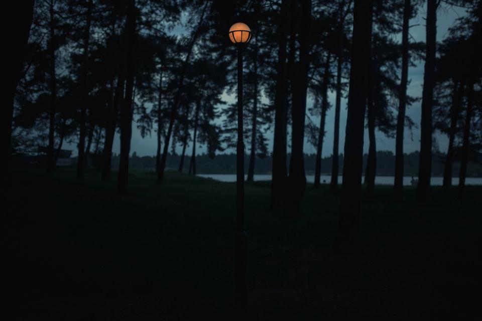 Ein Wald bei Nacht mit Laterne.