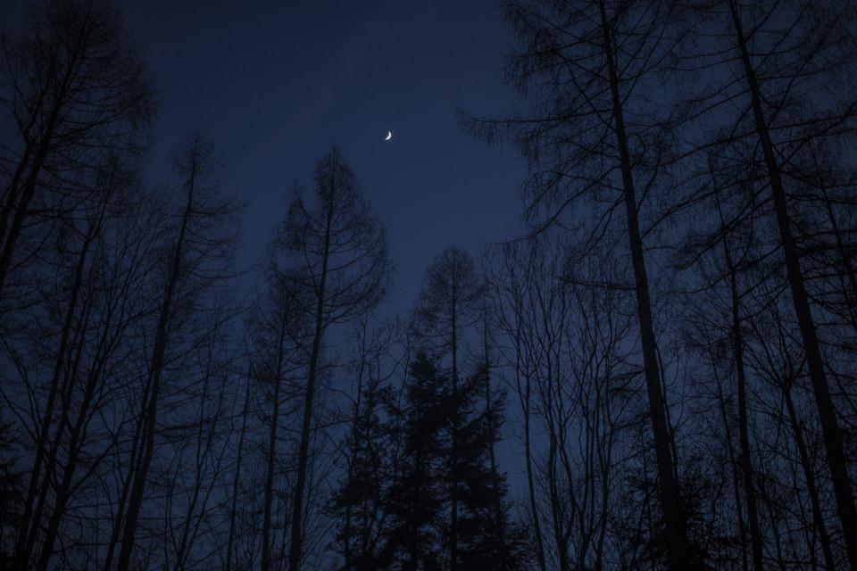 Ein Wald bei Nacht. Darüber die Mondsichel.