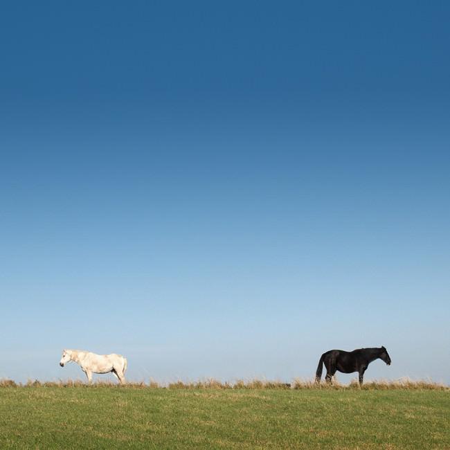 Zwei Pferde stehen auf einer Wiese und sehen in entgegengesetzte Richtungen.