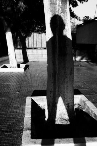 Der Schatten eines Menschen fällt auf einen Baum.