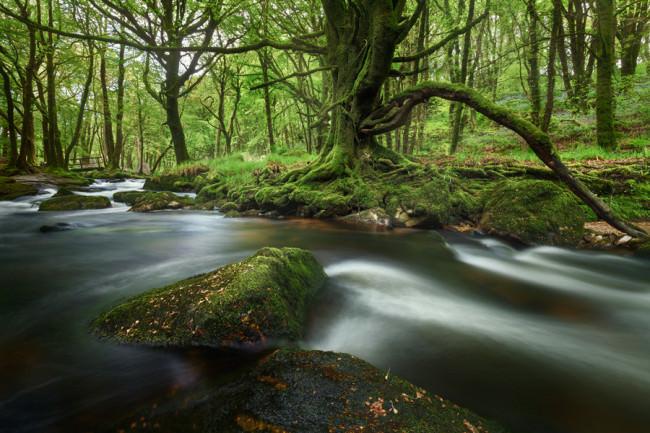 Der Fluss Fowey bei den Golitha Falls im Bodmin Moor, Cornwall.