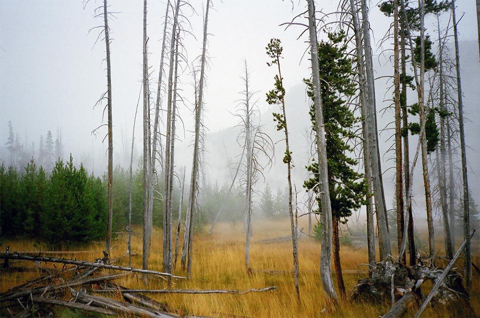Ein Waldstück mit gelbem Gras.