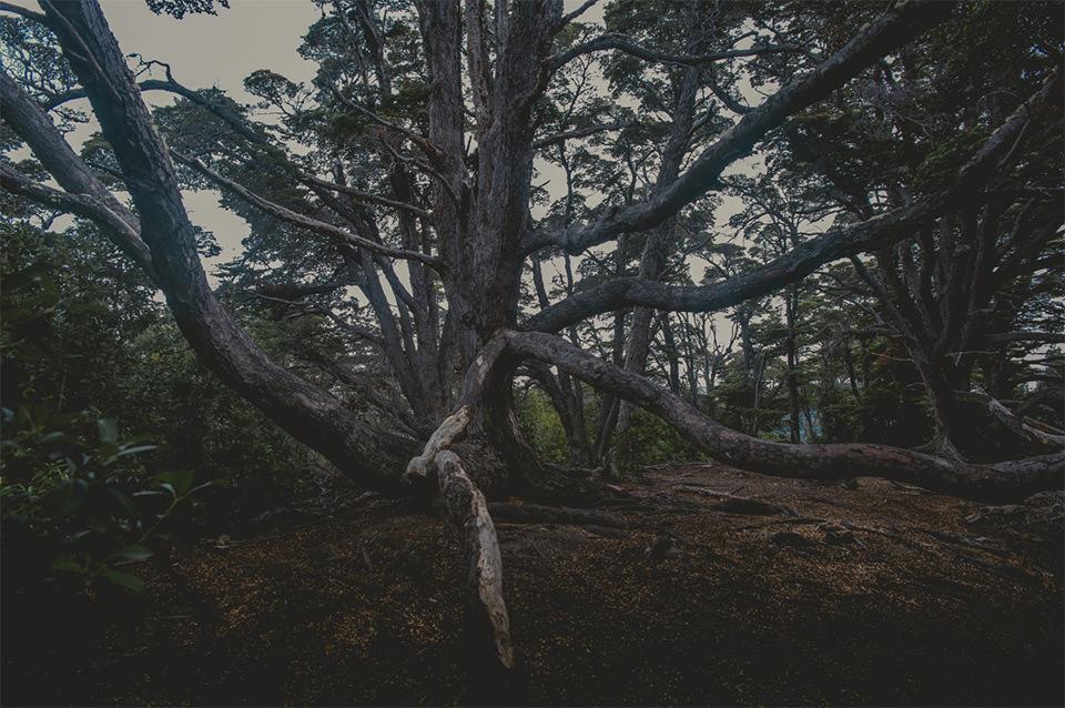 Ein stark verzweigter Baum.