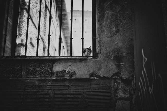 Eine Katze sitzt auf einer Mauer und schaut durch ein Gitter.