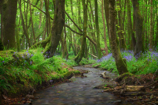 Ein verwunschenes Stück Wald nahe Camborne.