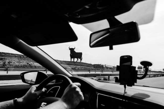 Durch ein Autofenster sieht man einen Stier.
