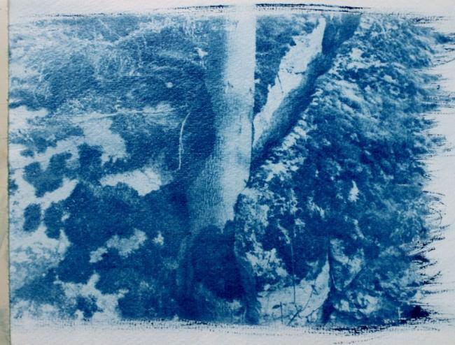 Eine Cyanotypie und darauf ein Baum.