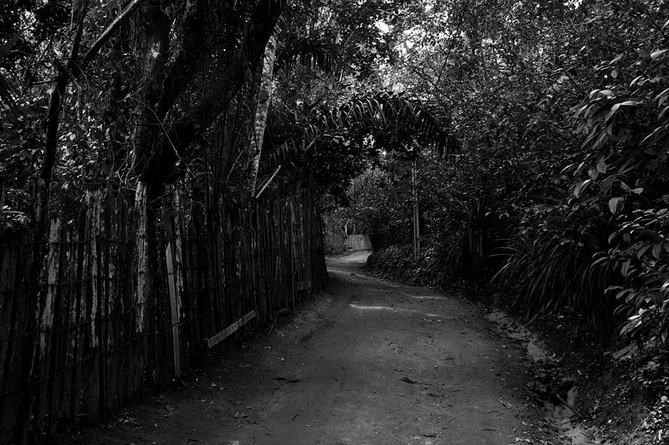 Ein Weg zwischen Bäumen und Sträuchern.