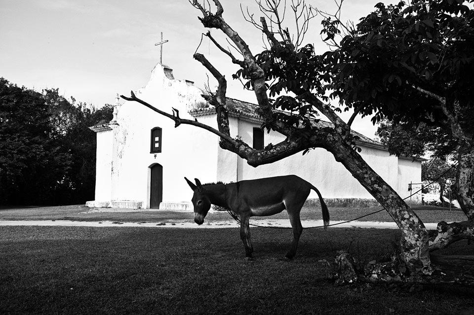 Ein Esel ist an einem Baum vor einer Kirche angebunden.