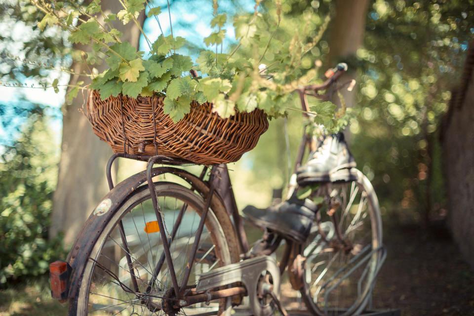 Ein Fahrrad steht am Wegesrand, auf dem Gepäckträger ragen Weinblätter heraus.