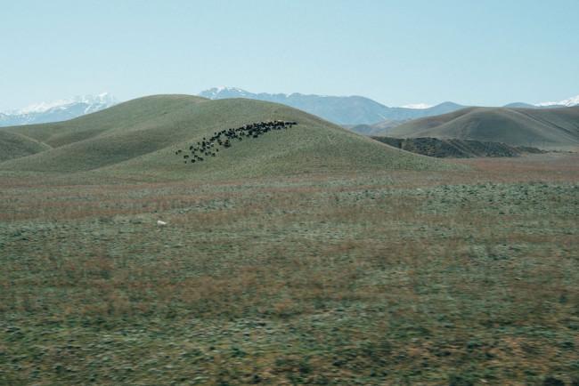 Eine Herde steht am Hang eines grünen Hügels in der Ferne.