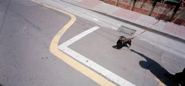 Ein Dackel an der Leine auf der Straße.