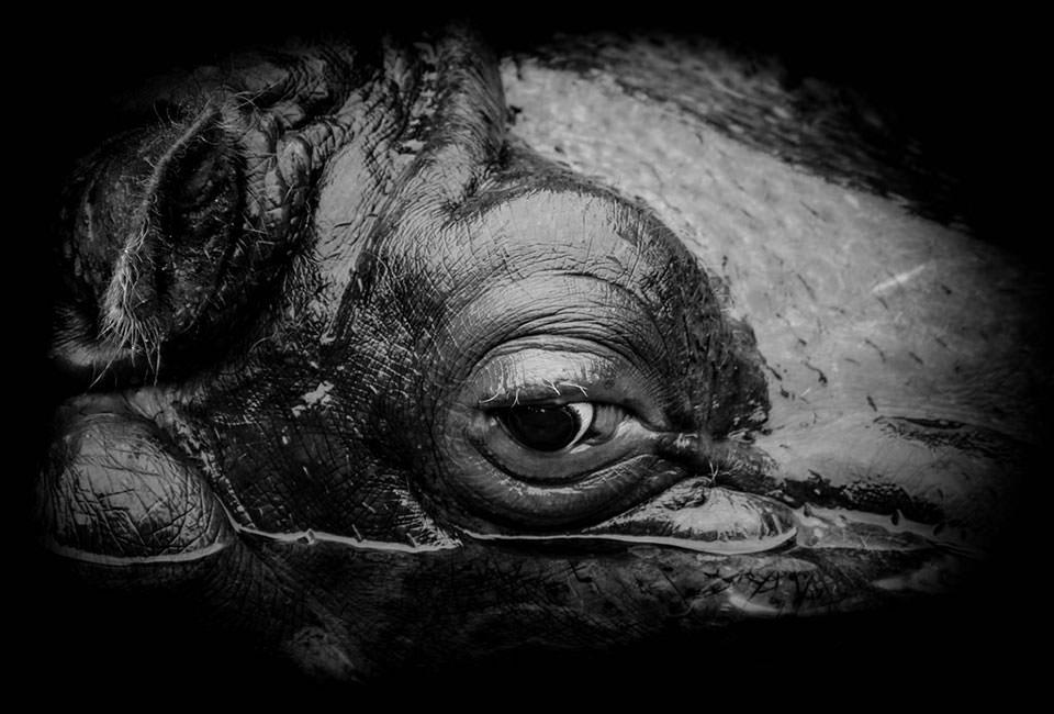 Hippopotamus's eye © Maike Berndt