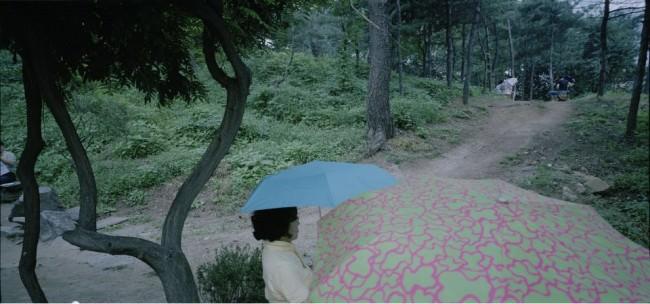 Bunte Regenschirme vor einem Waldweg.