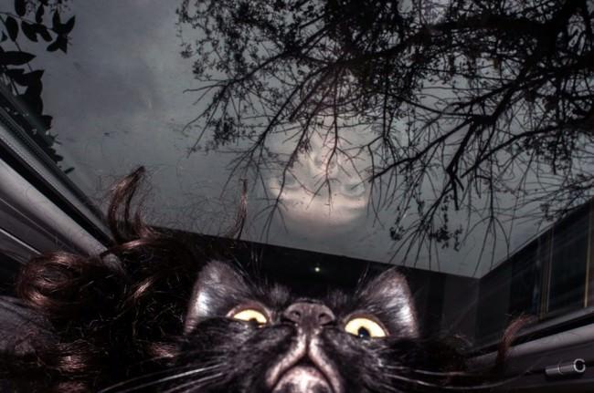 Ein Foto von einem Katzen- und einem Menschengesicht