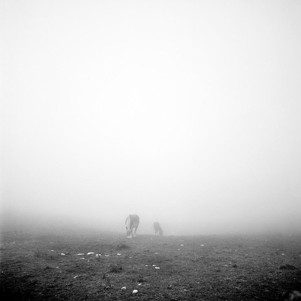 Pferde im Nebel.