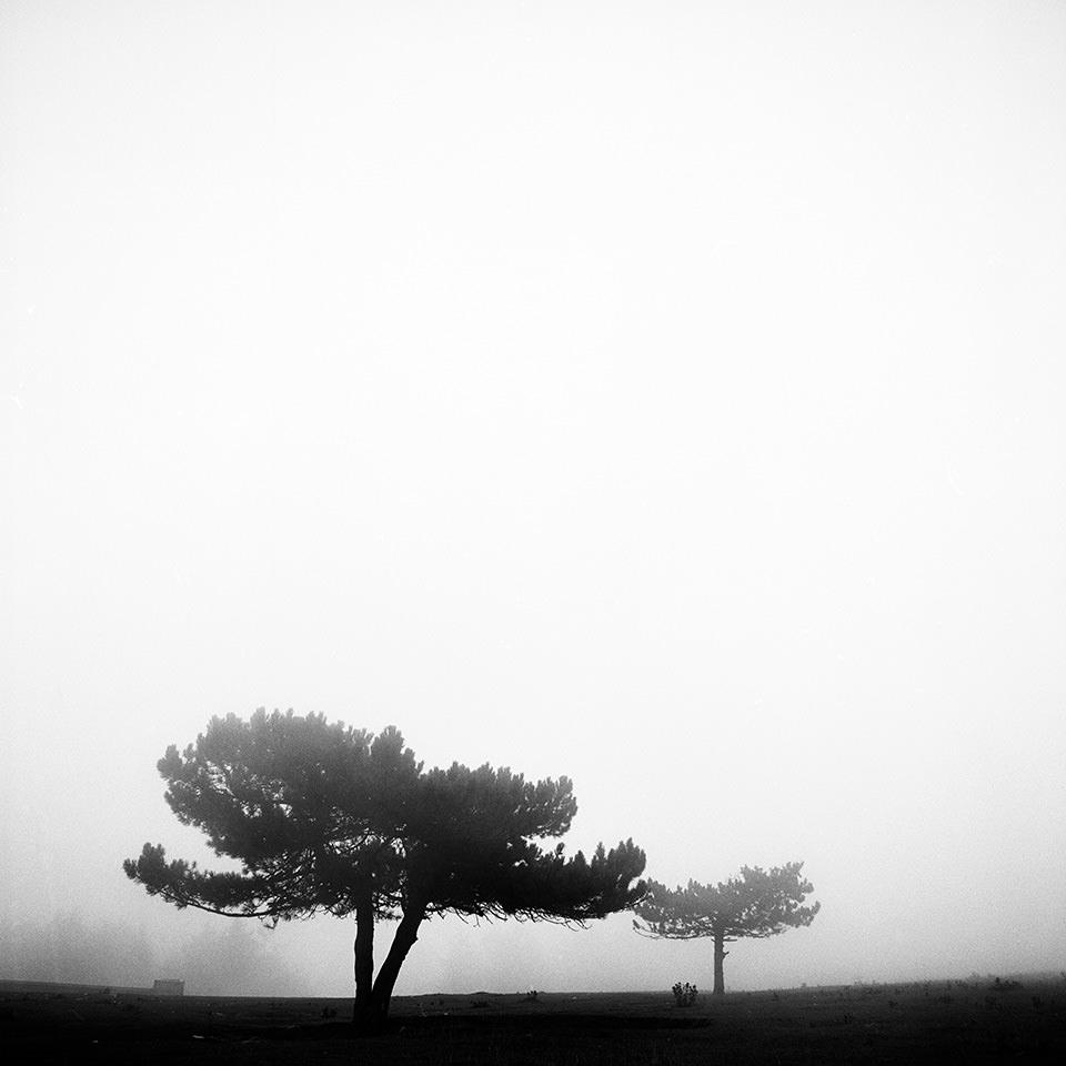Zwei Bäume im Nebel