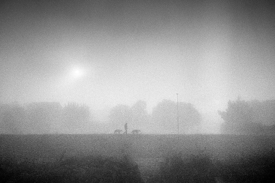 Eine Person und zwei Hunde im Nebel.