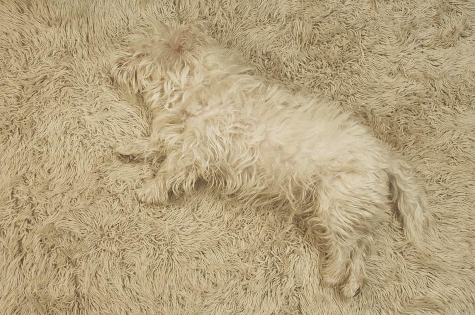 Ein weißer Hund auf weißem Teppich
