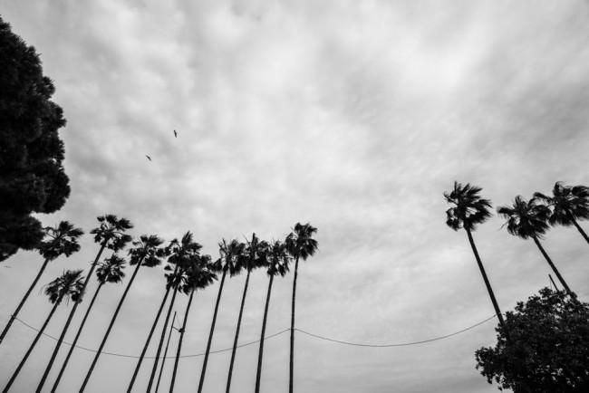Palmen vor einem wolkigen Himmel.