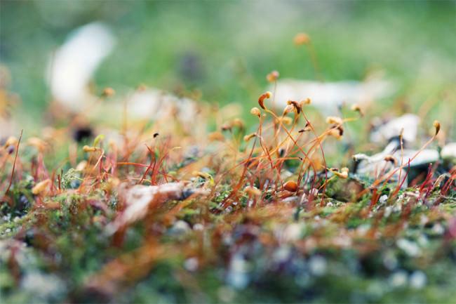 Kleine Pflanzen auf einer Parkbank