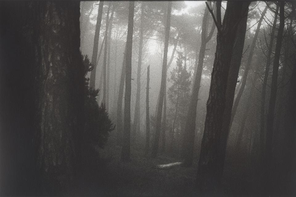 Wald im Nebel.