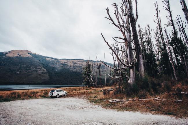 Waldrand mit toten Bäumen vor einem See mit Berglandschaft