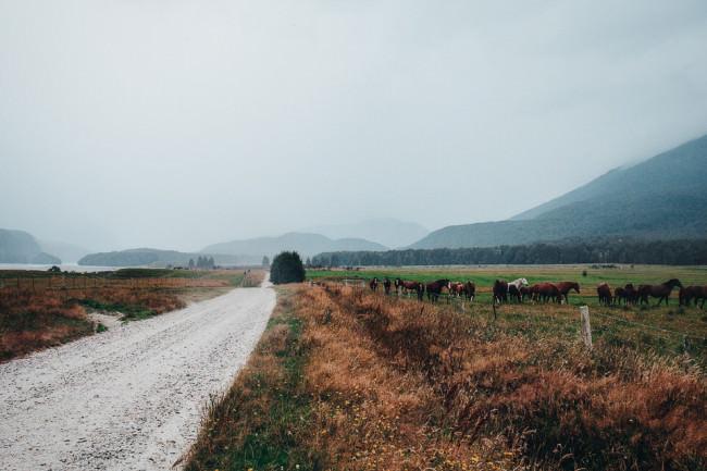 Straße in einer Berglandschaft mit einer Pferdeweide