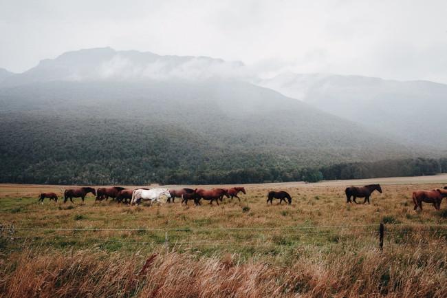 Pferdeweide vor einer Berglandschaft