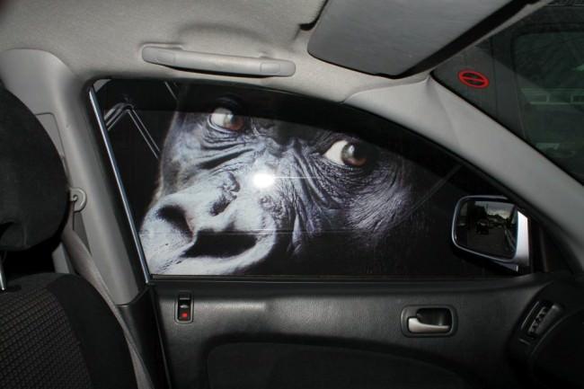 Das Gesicht eines Affen durch das Autofenster.