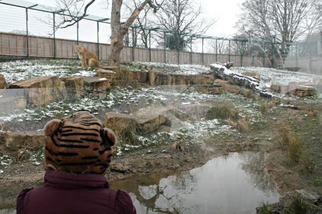 Ein Mensch mit Tigermütze vor einem Zoogehege.