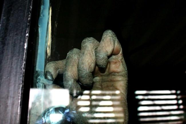 Die Hand eines Affen hinter der Scheibe.