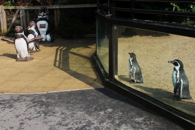 Pinguine im Zoo.