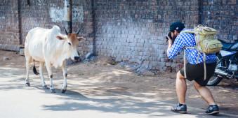 Ein mann fotografiert eine Kuh