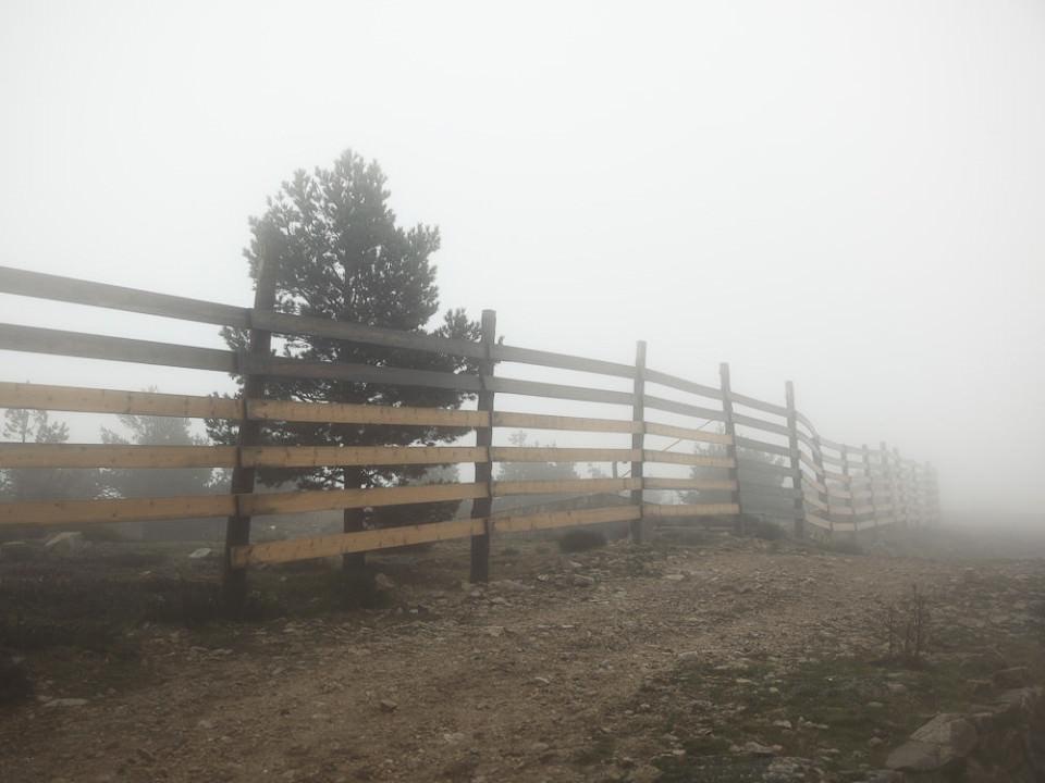 Ein Zaun, der über ein Feld verläuft und neben dem ein Baums teht, im Nebel.