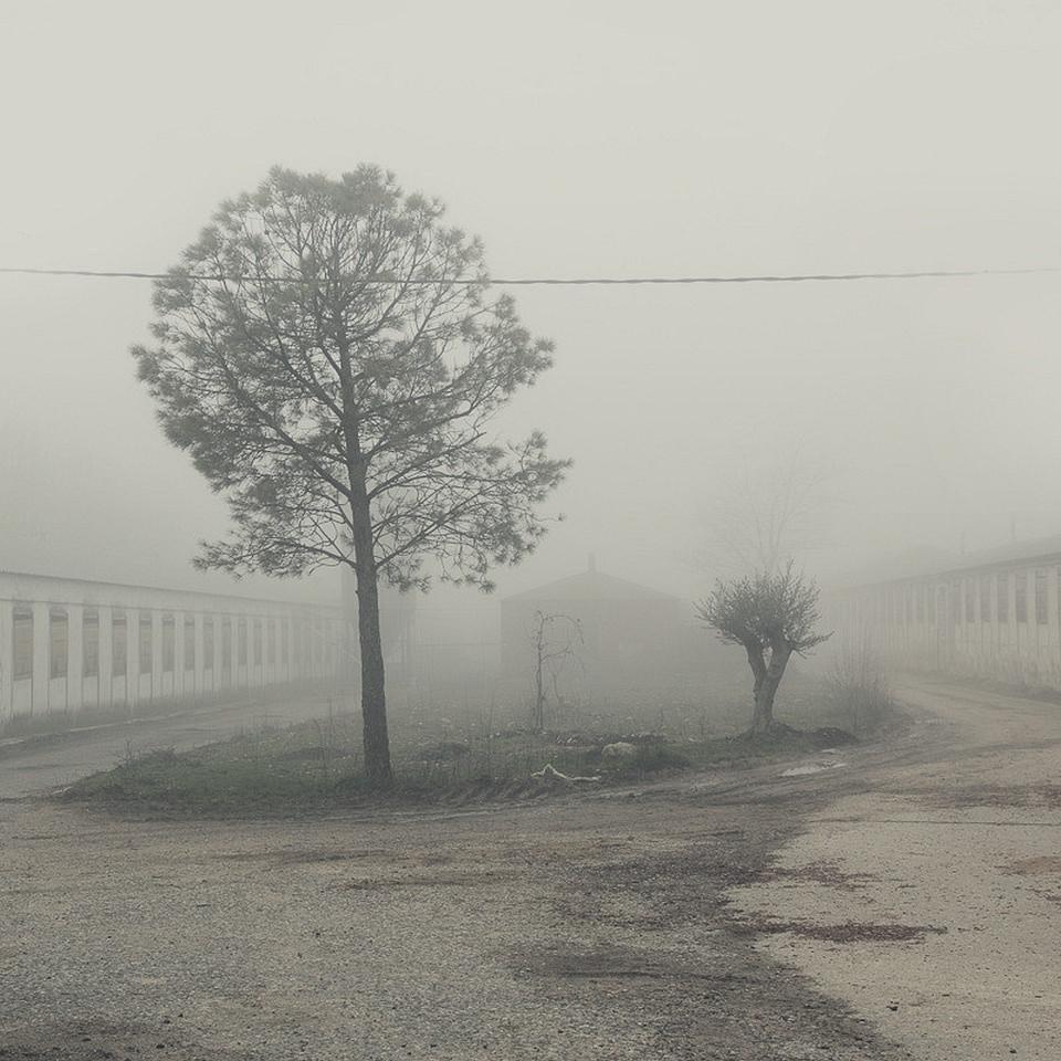 Eine Insel mit zwei Bäumen und Gestrüpp zwischen zwei Hauszeilen, dahinter Nebel.