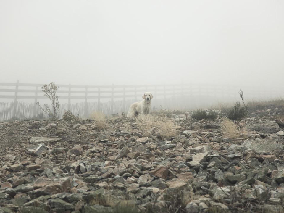 Ein Hund steht vor einem Zaun am Ende eines Geröllfeldes, dahinter dichter Nebel.