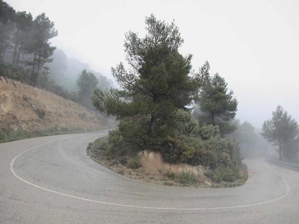 In einer Straßenkurve wachsen Bäume und Büsche, dahinter Nebel.