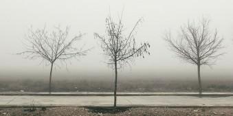 Drei kahle Bäume am Straßenrand vor dichtem Nebel.