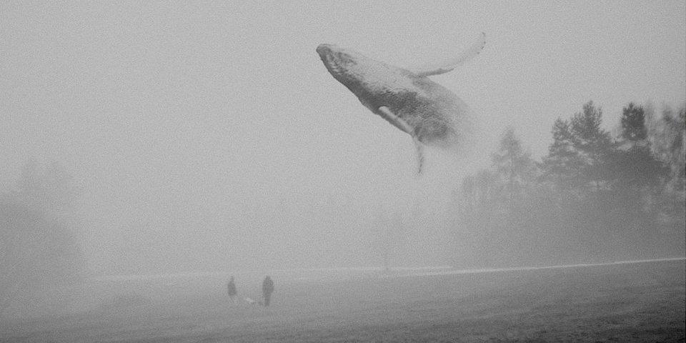 Zwei Personen stehen auf einem Feld, über dem ein Wal fliegt.