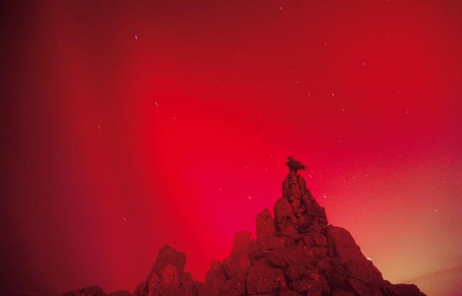 Ein Vogel auf einem Felsen, umgeben von sehr rotem Licht. Nachtaufnahme.