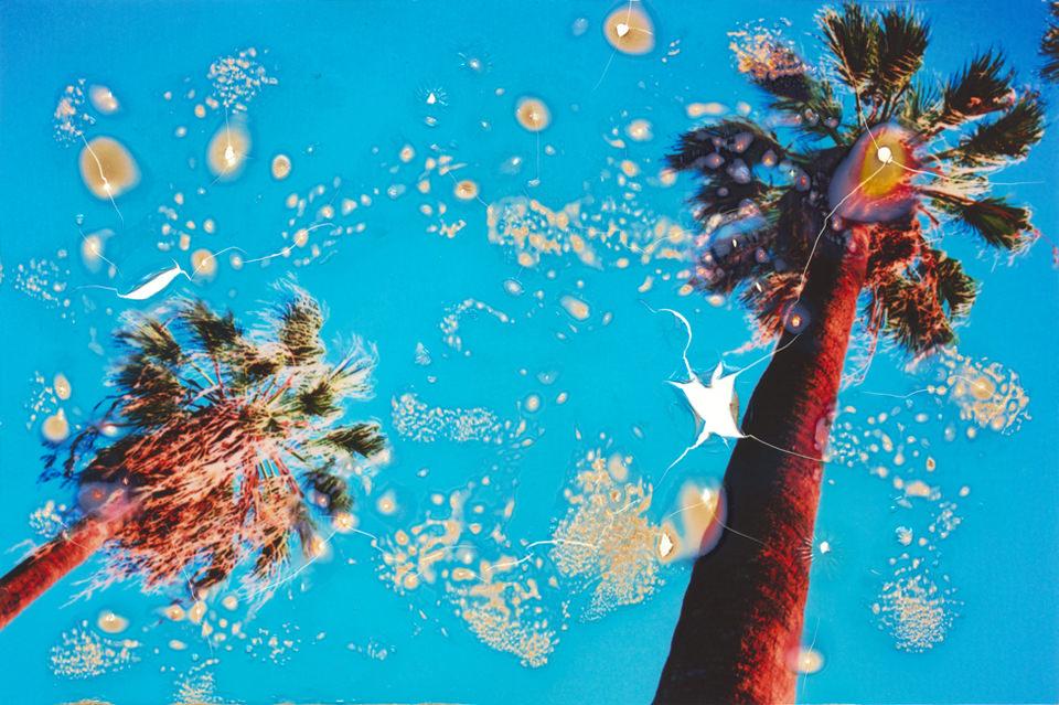 Zwei rote Palmen vor blauem Himmel.